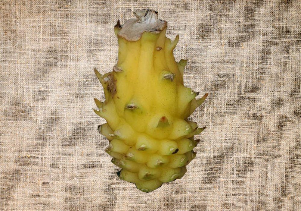 Yellow Coloumbian